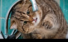 Funny Cat Live Wallpaper for Android app free download