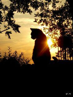 sunset by Tsahizn Tseh