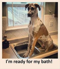 Funny images of the day (43 pics) I'm Ready For My Bath