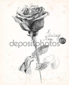 Kreslené tužkou růže. Vintage styl vektorové ilustrace — Stock ...