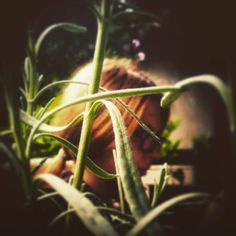 #naturalbeauty #greenandgold #love