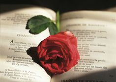 rode roos in boek kaart