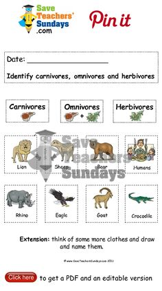 Year 1 Lesson 8 carnivores omnivores and herbivores worksheets, lesson plans and other primary teaching resources Kindergarten Science, Kindergarten Worksheets, Science Activities, Save Teachers Sundays, Herbivore And Carnivore, Seasons Lessons, Summer Worksheets, Animal Science, Science Fair