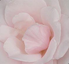 Bloom #soulflowercontest #letlifeflow #soulflowercontest