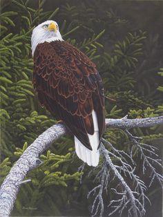 Canadian Wildlife Artist featuring original works of art and prints Original Artwork, Original Paintings, Canadian Wildlife, Happy Colors, Wildlife Art, Pictures To Paint, Art For Sale, Bald Eagle, Pride