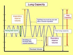 Human Physiology/The respiratory system - Wikibooks, open books ...