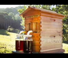 Best Bee Hive ever