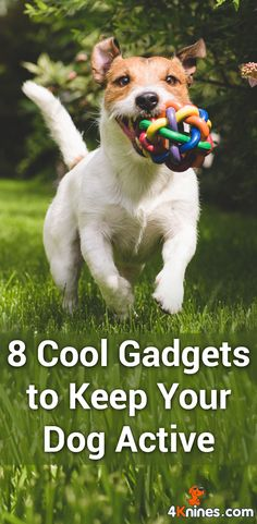 Dogs need mental stimulation and exercise just as much as we do. Here are the top 8 cool gadgets to keep your dog healthy, happy and safe from Stephanie Lynch. Read more here!