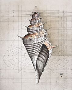 Golden spiral 3D shell