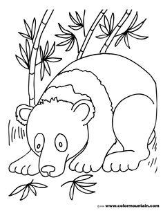 Color Panda Bear Coloring Pages New At Model Animal BearsColoring PagesBody PartsPandas