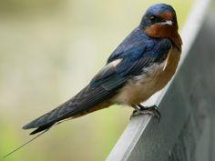 Φυσιογνωσία: Πτηνά της Ελλάδος (Β' Μέρος)
