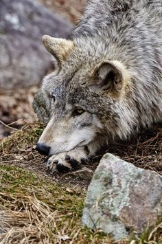 We are responsible for the care of all God's creatures stop killing them......