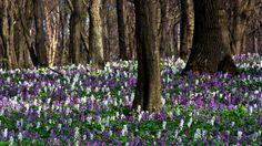 Gyönyörű, színpompás virágok, friss levegő és kiadós séta – az ideális kirándulás hozzávalói! Miközben élvezed a tavaszi zsongást, vigyázz a védett vadvirágokra, hogy az utánad érkezők is megcsodálhassák!