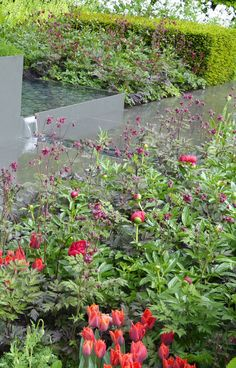 Magenta plants at the Telegraph garden at RHS Chelsea Flower Show 2015