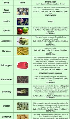 Bearded Dragon Food Chart - Food Scale - Ideas of Food Scale Bearded Dragon Food List, Bearded Dragon Habitat, Bearded Dragon Cage Ideas, Fancy Bearded Dragon, Tortoise Food, Tortoise Care, Reptiles, Lizards, Snakes