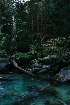 Wild 🍃 Wood