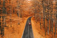 Guys guys, how about a road trip this fall 🍁🤩 ➖➖➖➖➖➖➖➖➖➖➖➖➖➖➖➖➖ 📍Bicsad, Covasna, Romania 🇷🇴 ➖➖➖➖➖➖➖➖➖➖➖➖➖➖➖➖➖ 📷 💯🙏❤ National Geographic, Romania, Drum, Travel Photography, Road Trip, Country Roads, Instagram Posts, Guys, Road Trips