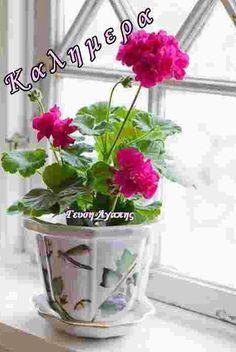 Pink pelargonium in a lovely pot. Arrangements Ikebana, Floral Arrangements, Container Plants, Container Gardening, Succulent Containers, Container Flowers, Vegetable Gardening, Garden Plants, Indoor Plants