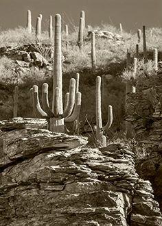 """Esperanto Canyon #2"", 5x7 Inches and Larger, Fine Art Print Only, Desert Cactus, Arizona Art, Sepia Desert, Cactus Art. Esperanto Canyon of the Santa Catalina Mountains, southern Arizona, planet Earth!."