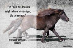 Gustav Rau: Die Seele des Pferdes