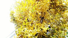 雨上がり秋晴れ そろそろ最後の秋かな #秋田 #秋田市