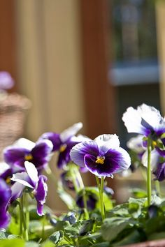 Kokosimme avuksesi ohjeita helpottamaan kesän pihatöiden tekemistä. Katso parhaat vinkit ja hommiin sopivat tuotteet. Outdoors, Garden, Plants, Garten, Lawn And Garden, Gardens, Plant, Outdoor Rooms, Gardening