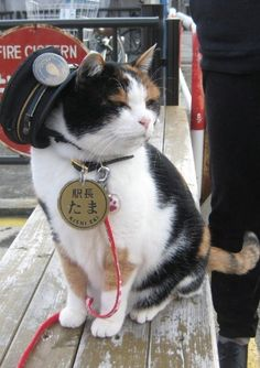 Since a calico named Tama has served as Super Station Master of Kishi stat… Seit 2007 dient ein Kaliko namens Tama als Super Station Master der Kishi-Station in Kinokawa City – der letzten Station der Wakayama Electric Railway. I Love Cats, Cute Cats, Funny Cats, Funny Animals, Cute Animals, Funniest Animals, Wakayama, Cat Symbolism, Calico Cat Names