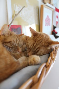 Lazy January Sunday - ginger boys