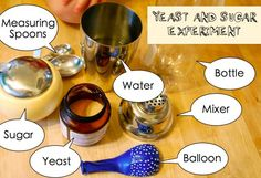 Yeast & Sugar Experiment (blows up the balloon)