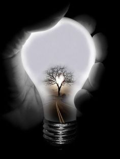 Black and White My favorite photo  heart shape in tree branches silhouette lightbulb,