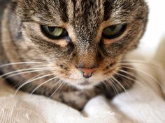 Isabels Katze ist skeptisch, weil sie die Kamera nicht mag. Das Bild ist trotzdem sehr schön!