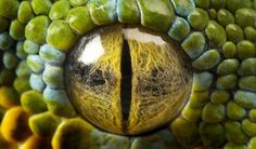 .Perfect version of what Snake's eyes should be