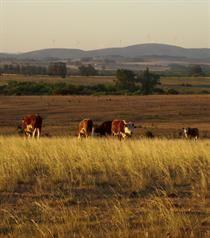 Campo de Uruguay al atardecer (Foto: William Gustavo Moreira)
