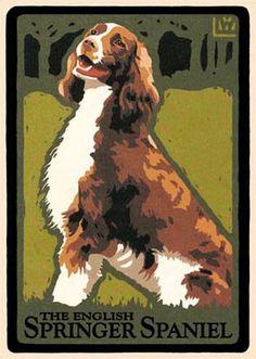Laura Wilder The English Springer Spaniel Spaniels, Cocker Spaniel, Cool Photos, Amazing Photos, Stamp Printing, English Springer Spaniel, Poster Prints, Art Prints, Rock Posters