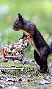 Homeless Squirrel collecting cans and bottles