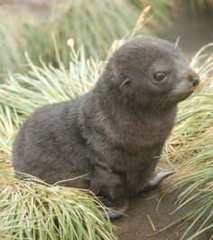 This baby seal is too cute for words.