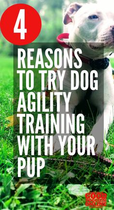 Dog Agility Top 4 Reasons To Try Dog Agility Training With Your Pup - Dog agility training can be a fun way to get your dog some much needed physical and mental excercise. Check out the top reasons to try dog agility training. Agility Training For Dogs, Training Your Puppy, Dog Training Tips, Potty Training, Brain Training, Dog Minding, Easiest Dogs To Train, Aggressive Dog, Dog Hacks