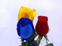 Flowers Gif, Beautiful Flowers, Irish American, Little Sisters, Smiley, Primary Colors, South America, Red Roses, Diy Wedding