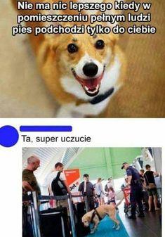 Es gibt nichts schöneres, als wenn der Hund sich dafür. Wtf Funny, Funny Cute, Funny Jokes, Hilarious, Meme Comics, Memes Humor, Polish Memes, Weekend Humor, Funny Mems