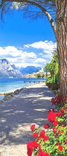 Science Discover Malcesine Lake Garda Italy is part of Beautiful places - Malcesine Lake Garda Italy Italy Vacation Vacation Spots Italy Travel Vacation Travel Italy Trip Vacation Places Wonderful Places Beautiful Places Romantic Places Italy Vacation, Italy Travel, Vacation Spots, Vacation Travel, Italy Trip, Vacation Places, Places To Travel, Places To See, Travel Destinations