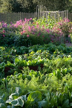 Lovely veggie patch, Perch Hill // Swede Cottage Farm <3 this //