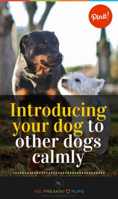 Introducing your dog to other dogs calmly #puppies #puppy #pup #dogs #dog #tips  #training #howto #how #ideas
