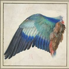 """A Dürer Retrospective Celebrates His Remarkable Drawings: Albrecht Dürer, """"Left Wing of a Blue Roller"""" (ca. watercolor, body color, heightened with opaque white (© The ALBERTINA Museum, Vienna). Albrecht Durer, Mondrian, Watercolor Painting Techniques, Watercolor Paintings, Albertina Wien, Kunsthistorisches Museum Wien, National Gallery Of Art, Botanical Drawings, Large Painting"""