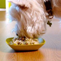 Pet Dogs, Pets, Dog Cakes, Homemade Dog Treats, Dog Snacks, Pet Care, Food Videos, Dog Food Recipes, Dog Products