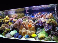 beautiful fish aquariums | ... Coral Reef CLown Fish Colorful Fish Clear Water Large Aquarium Image