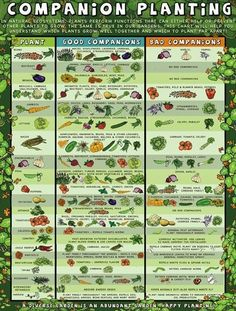 Companion planting: Which plants work well with each other and which dont.