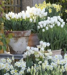 White potted flowers