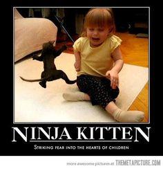 Ninja kitten…