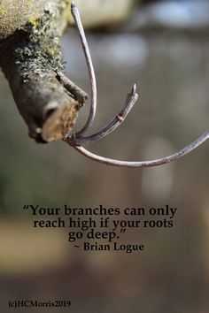 close up image of a tree branch with Brian Logue quote
