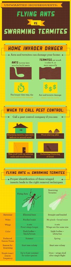 Flying Ants vs. Swarming Termites. #infographic #termites #pestcontrol